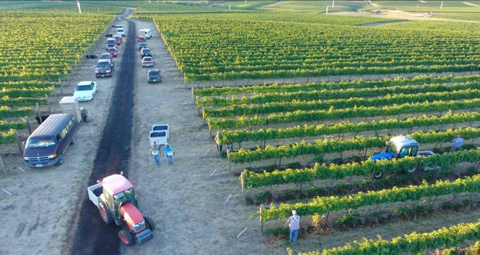 Vineyard Education Series 2020